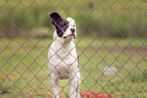 clôture électrique chien